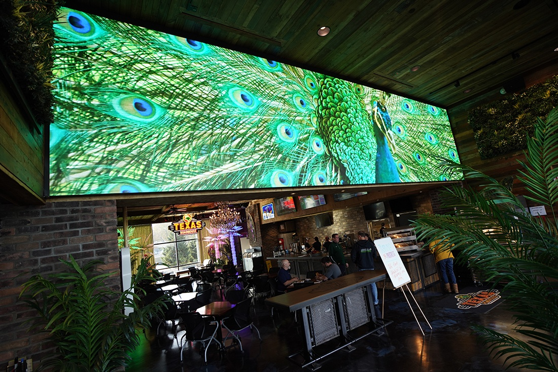 large video wall showing a peacock on screen